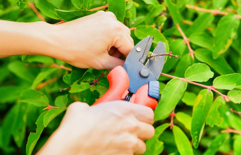Mantenimiento de jardines en navarra tu jard n navarra for Trabajo de mantenimiento de jardines